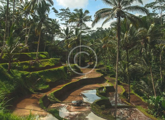 Quick Travel Guide: Bali